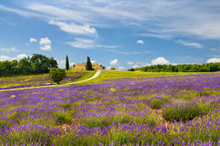 Lavender field in Provence, France. Stock Photography
