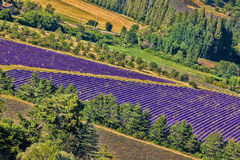 Lavender field in Provence, near the Sault town in France. Famous Lavender field in Provence, near the Sault town in France Stock Photo