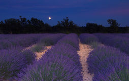 Lavender field in Provence under the moonlight Stock Photos
