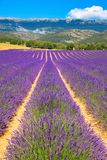 Lavender field. Purple flowers. French Alps, Provence. Summer landscape Royalty Free Stock Image