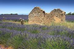 Lavender field and ruin Stock Photo