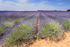 Lavender field and ruin Royalty Free Stock Photo