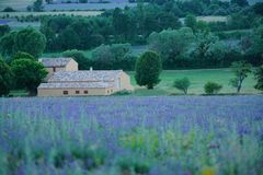 Lavender Field in Sault. Lavender Field in the evening at Sault, Vaucluse, France Royalty Free Stock Photos