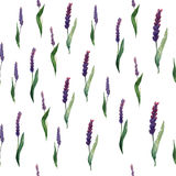 Lavender field seamless pattern. Creative design Stock Photos