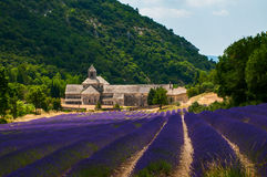 Lavender Field  in Senanque Abbey in Provence, France Royalty Free Stock Photography