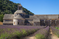Lavender field at Senanque Royalty Free Stock Photo
