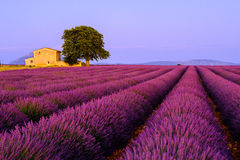 Lavender field in the South of France Stock Photos