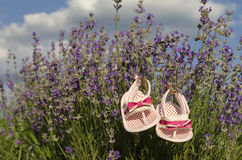 Lavender field in summer Stock Images