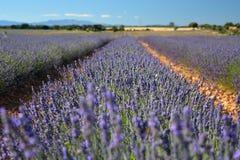 Lavender field, summer landscape near Brihuega,Guadalajara, Spain royalty free stock image