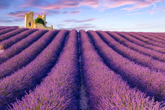 Lavender field summer  near Valensole Royalty Free Stock Image