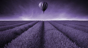 Lavender field Summer sunset landscape with hot air balloon tone Stock Photography