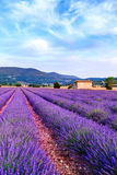 Lavender field summer sunset landscape near Sault. Provence - France Stock Photos