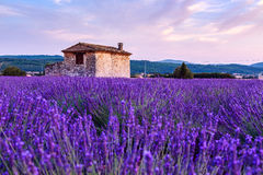 Lavender field summer sunset landscape near Sault Stock Photography