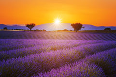 Lavender field summer sunset landscape. With two tree near Valensole.Provence,France Stock Photo