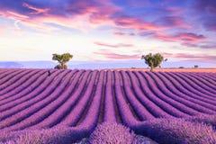 Lavender field summer sunset landscape Stock Photos