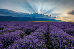 Lavender field at sunrise in Bulgaria. Lavender field shot at sunrise with brilliant rays of light coming from clouds. Shot in Karlovo, Bulgaria stock images