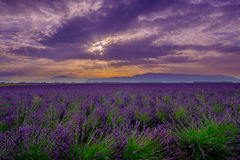 Lavender field at sunrise in Provence. France stock photos