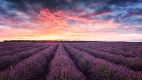 Lavender field at sunrise. Stunning view with a beautiful lavender field at sunrise royalty free stock image