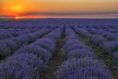 He lavender field at sunrise or sunset. Amazing landscape with the lavender field at sunrise or sunset stock photo