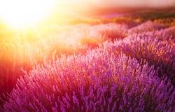 Lavender field in the sunset in Kuyucak, Isparta, Turkey. stock photography