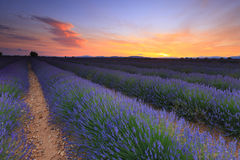 Lavender field sunset stock photo