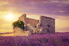 Lavender field at sunset Royalty Free Stock Photos