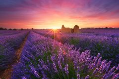 Lavender field in Provence, France Royalty Free Stock Photos