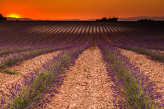 Lavender field on sunset, Valensole plateau, France Royalty Free Stock Photos