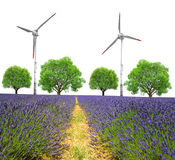Lavender field with trees and wind turbines Stock Photo