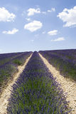 Lavender field in Valensole Stock Photo