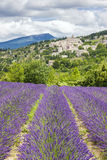 Lavender field and village Royalty Free Stock Photo