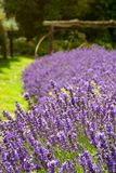 Lavender field and wagon wheel in Sequim Royalty Free Stock Photos