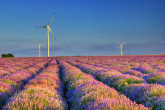 Lavender field with wind turbines, Bulgaria. Amazing picture was taken near Kaliakra cape, during summer Stock Image