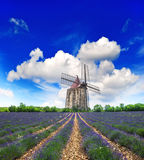 Lavender field with windmill in Provence Stock Photo