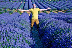 Lavender fields. Of the French Provence near Valensole Royalty Free Stock Photo