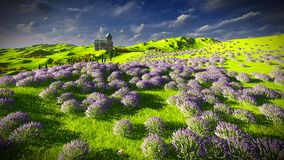 Lavender fields Royalty Free Stock Photo