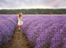 Among the lavender fields Royalty Free Stock Images