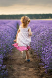 Among the lavender fields Stock Photos