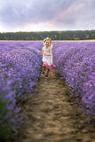 Among the lavender fields Stock Photography