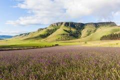 Lavender Fields Farming Mountains Royalty Free Stock Photos