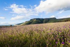 Lavender Fields Farming Mountains Stock Image