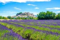 Lavender fields in France Stock Photo