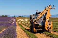 Lavender fields harvesting in valensole provence france landscape. Tractor on the field Stock Photography