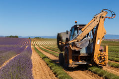 Lavender fields harvesting in valensole provence france landscape. Tractor on the field Royalty Free Stock Photo