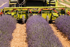 Lavender fields harvesting in valensole provence france landscape. Tractor on the field Royalty Free Stock Images