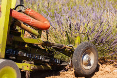 Lavender fields harvesting in valensole provence france landscape. Tractor on the field Royalty Free Stock Photography