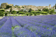 Lavender fields hilltown provence france Stock Images