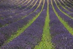 Lavender fields near Sault, France Royalty Free Stock Photos