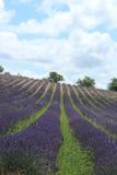 Lavender fields near Sault, France Stock Image