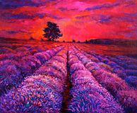 Lavender fields. Original oil painting of lavender fields on canvas.Modern Impressionism Stock Images